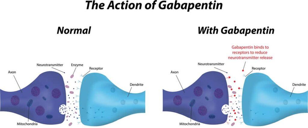 How Gabapentin effects the brain